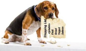 dog eating shopping list